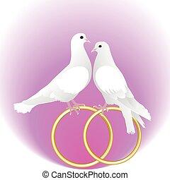 pombos, branca, anéis, dois, ouro