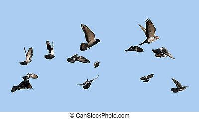 pombos, voando, para, a, sol
