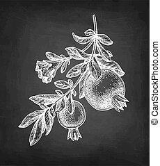 Pomegranate chalk sketch.