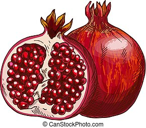 Pomegranate fruit isolated sketch for food design