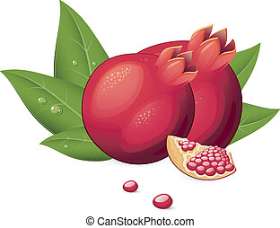 Pomegranate Fruit - Vector illustration of Pomegranate over ...