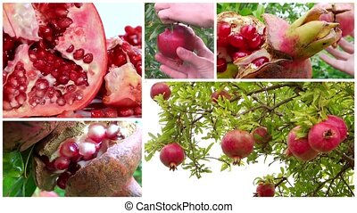 pomegranate montage - montage including pomegranates close...