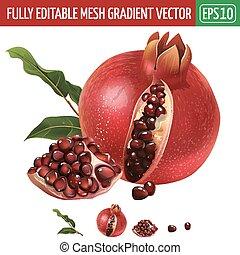 Pomegranate on white background. Vector illustration