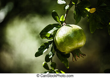 Pomegranate Tree in green background