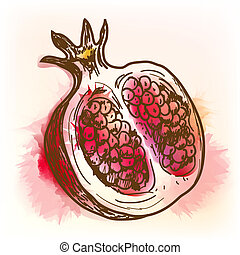 Pomegranate, watercolor painting - Pomegranate. Original...