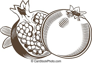 Pomegranates in vintage style. Line art vector illustration