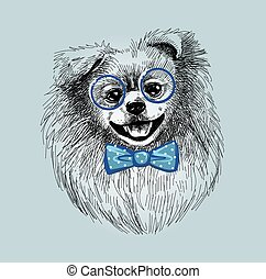 Pomeranian dog in fashionable glasses and bow tie. A sketch ...