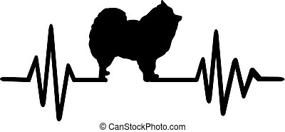 Pomeranian pulse heartbeat
