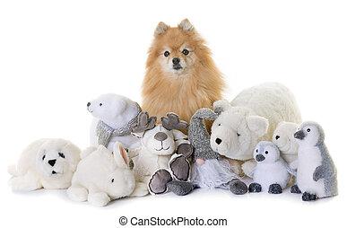 pomeranian spitz and cuddly toys