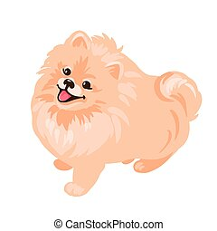 Pomeranian Spitz puppy isolated on white background. Small German spitz. Little dog vector stock illustration. Cute fluffy pet. Domestic animal in cartoon style.