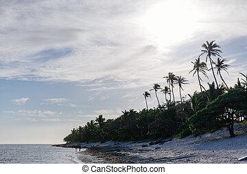 pomeriggio, su, il, corallo, costa, di, figi