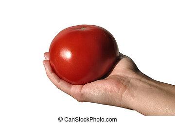 pomidor, dzierżawa