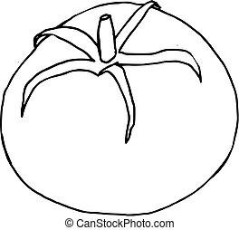 pomidor, pociągnięty, (vector), ręka