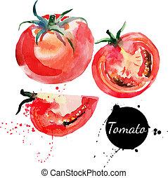 pomidor, set., ręka, akwarela, tło., pociągnięty, biały,...