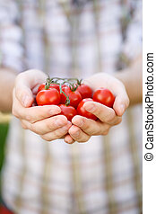 pomidor, wiśnia, szczelnie-do góry, dłonie