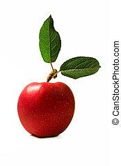 pomme, à, feuilles