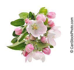pomme, blossoms.