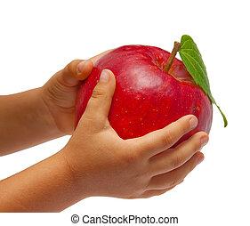 pomme, enfants, isolé, arrière-plan., hands., blanc rouge