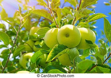 pomme, fond, fruits