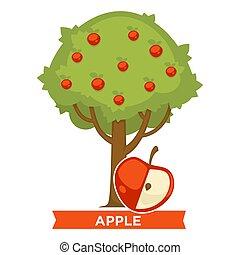 pomme, mûre, grand arbre, feuillage, fruits, épais, rouges