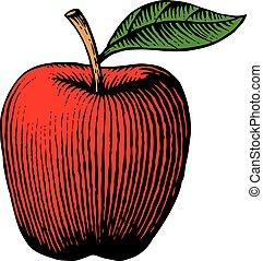 pomme, vendange, -, illustration, vecteur, (hand, dessiné, style), gravé