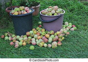 pommes, paniers