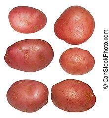 pommes terre, isolé, ensemble, blanc rouge