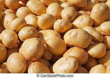 pommes terre, or, yukon