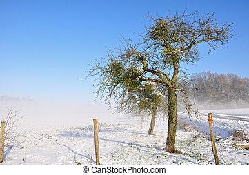 pommier, dans, hiver