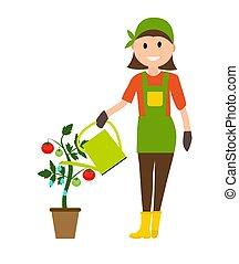 pomodoro, appartamento, pianta, donna, moderno, stile, illustrazione, vettore, lattina, contadino, irrigazione, giardiniere