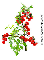 pomodoro, ciliegia