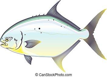 Pompano Florida fish vector illustration