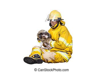 pompiere, salvato, isolato, fuoco, pompiere, animali domestici, bianco