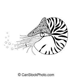 pompilius., marine., 黒, ベクトル, chambered, 白, illustration., ...