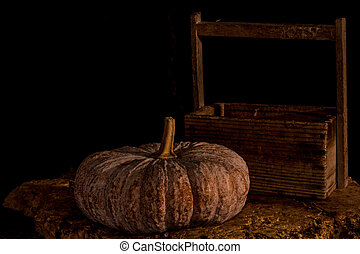 pompoennen, met, donkere achtergrond