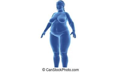 pomyłka, szczupły, -, samica, czas, alfa, otyłość, kanał