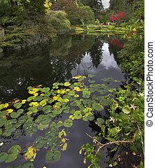 pond., שלווה