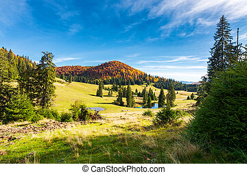 pond among spruce trees. beautiful autumn landscape in...