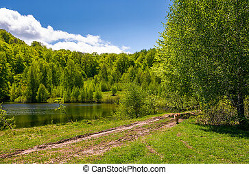 pond among the forest on fine spring day. lovely nature...