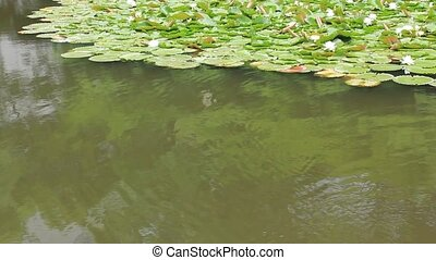 pond and carp - I took the state that a carp swam in a pond.