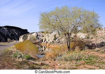 Pond and Tree by the Road in Rural Utah