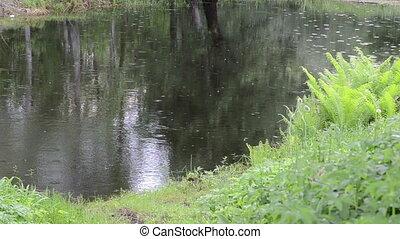 pond drops raining