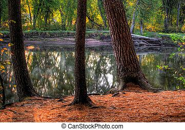 pond., hdr, táj, erdő