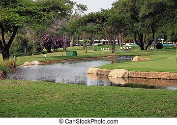 pond in a lush green garden