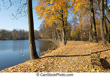 Pond in a park in vivid autumn colors