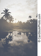 Pond in a Tropical Forest with Retro Style Filter