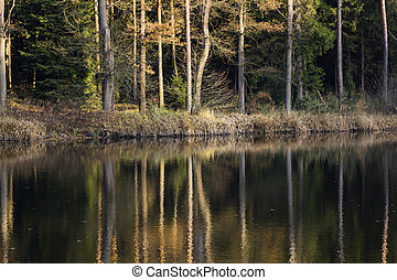 pond in autumn with reflection tree