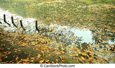 Pond in park with golden leaves
