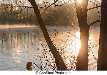 Pond in the diffuse morning fog