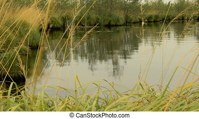 Pond in the forest. Autumn daytime. Smooth dolly shot